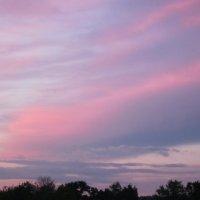 Розовый закат :: вера Верхозина