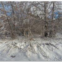 Очарование зимы :: Сергей Бережко