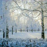 Колдовала зима :: Elena Izotova