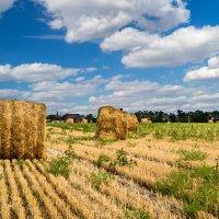 Сельский пейзаж :: Виталий Кийко