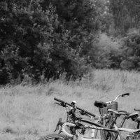 Семья велосипедов :: Elena Agaeva