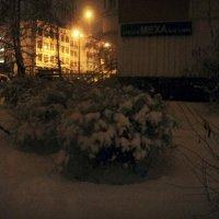 Зимние вечерние.. :: Ольга Кривых