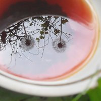 Чай с одуванчиками! :: Наталья