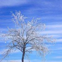 Наконец-то зима :: Надежда Петрова