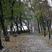 Осення  грусть :: Владимир Бровко