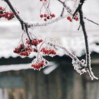 а вот и Зима :: Emma Smit