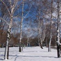 посмотрю хоть на весенний снег :: Ирина ***