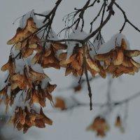 Осень в зимней шубке :: Юрий