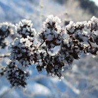 В зимнем наряде :: Елена Павлова (Смолова)