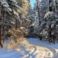 И зимние наметились дороги... :: Лесо-Вед (Баранов)