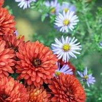 Цветы осени :: Olga F