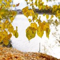 золотая осень :: Катерина Коленицкая