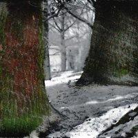 Зима в парке :: Георгий Столяров
