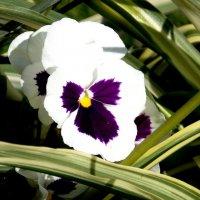 Летом в саду :: Фотогруппа Весна.