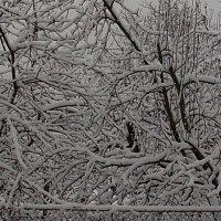 зима зима :: надя кулинич