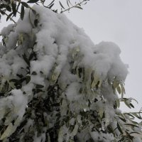Оливковая веточка. :: Жанна Викторовна