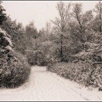 графика зимы... :: Наталья Маркова