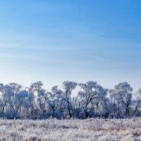 Замёрзшие деревья :: Анатолий Клепешнёв