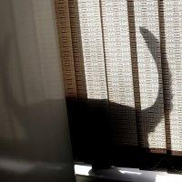 Таинственное  исчезновение  в  холодильнике....... или ДВА  хвоста...) :: Валерия  Полещикова