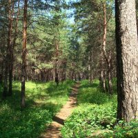 Весенний лес :: Стас Борискин (Stanisbor)