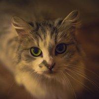 Кошка,которая очень любит фотографироваться:) :: Галина Мещерякова