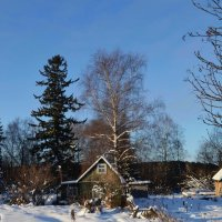 Сказки зимнего леса :: Вера Андреева