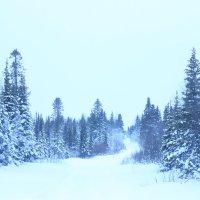 Дорога в лес :: Ananasik XI