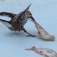 Это моя рыба! :: Георгий Кулаковский
