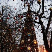 Самая елистая елка страны #2 :: Alex Sash