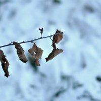 Ранняя зима :: DaRiA V