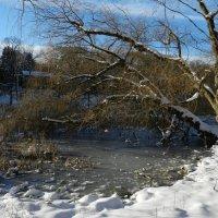 У пруда в парке (High Park, Toronto) :: Юрий Поляков