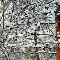 Зима в городе. :: Владимир Михайлович Дадочкин
