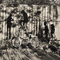 На заборе виснет тень: для неё висеть не лень... :: Ирина Данилова