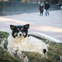 ***Умная собака :: Allekos Rostov-on-Don