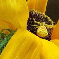 Жизнь в желтых цветах :: Natali
