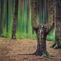 Мистический лес :: Максим Дорофеев