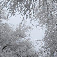Небо в зимних кружевах... :: Тамара (st.tamara)