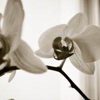 В черно-белом цвете.2 :: Viktoria Tkach
