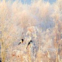 В зимнем лесу. :: Hаталья Беклова