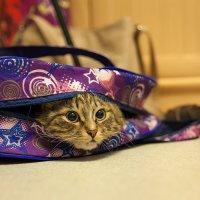 из серии...найди кота :: Юрий ефимов