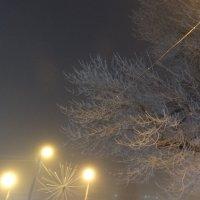 Туманный вечер... :: Тамара (st.tamara)