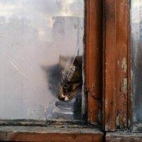 Кот в окошке :: Мария Незнанова