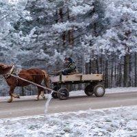 Гулял мороз... :: Анатолий Клепешнёв