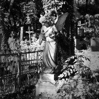 Грустный ангел. :: Андрий Майковский