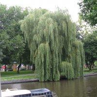 Каналы  Амстердама :: шубнякова