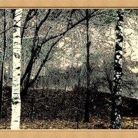 14-12-14, пейзаж :: Юрий Бондер