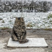 Одинокий и печальный :: Valeriy Piterskiy