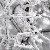 Зимнее украшение... :: Тамара (st.tamara)