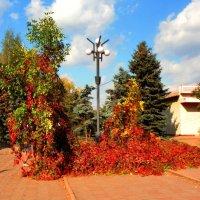 Осень в парке :: Oleg Ustinov