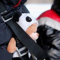 Медвежонок :: Дмитрий Арсеньев